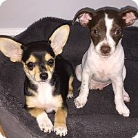 Adopt A Pet :: Alex and Austin - Overland Park, KS