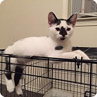 Adopt A Pet :: Josie - Fort Worth, TX