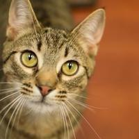 Adopt A Pet :: Casper - Madison, GA