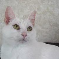 Adopt A Pet :: AA-Selena - Tyler, TX