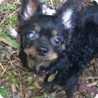 Adopt A Pet :: Ogden - Oak Ridge, NJ