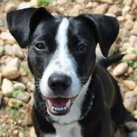 Adopt A Pet :: Moonpie 5332 - Columbus, GA