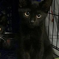 Adopt A Pet :: Keystone - East Brunswick, NJ