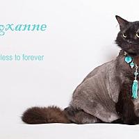 Adopt A Pet :: Roxanne - Sherman Oaks, CA