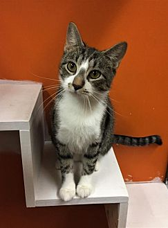 Adopt A Pet :: Flower (Bonded with Meercat)  - Blasdell, NY