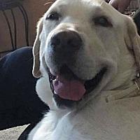 Adopt A Pet :: Oakley - Long Beach, NY