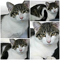 Adopt A Pet :: Leif - Forked River, NJ