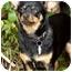 Photo 1 - Chihuahua Mix Dog for adoption in El Segundo, California - Jack