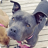 Adopt A Pet :: DELILAH - Kingston, WA
