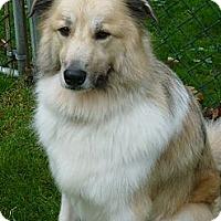Adopt A Pet :: Benji - Milford, CT