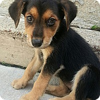 Adopt A Pet :: Annie(ADOPTED!) - Chicago, IL