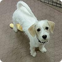 Adopt A Pet :: Floyd - wirey cutie! - Phoenix, AZ