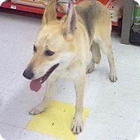 Adopt A Pet :: Rose - Evergreen Park, IL