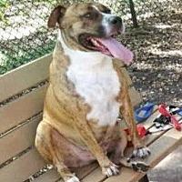 Adopt A Pet :: Mack (352) 345-9380 - Miami, FL