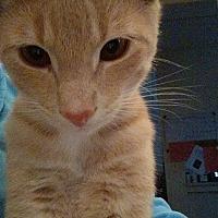 Adopt A Pet :: Linden - Mt Pleasant, PA