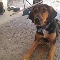 Adopt A Pet :: Darbie - Bryson City, NC