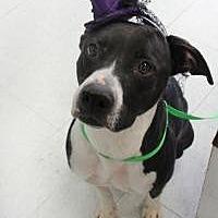 Adopt A Pet :: Xana - Yukon, OK