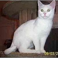 Adopt A Pet :: PENELOPE - Chapman Mills, Ottawa, ON