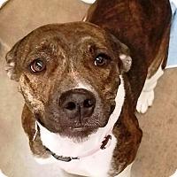 Adopt A Pet :: Gloria - Mandy S. - Kalamazoo, MI