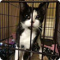 Adopt A Pet :: Aggie - Byron Center, MI