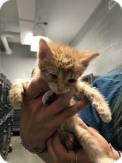 Adopt A Pet :: Stella  - Henderson, NC