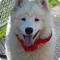 Adopt A Pet :: PB - Clayton, NJ