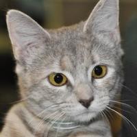 Adopt A Pet :: Gracie - Tilton, IL