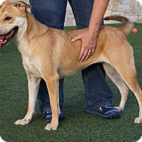 Adopt A Pet :: Danielle - North Richland Hills, TX
