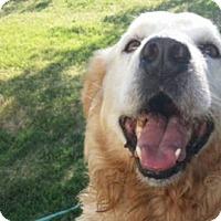 Adopt A Pet :: Maverick - Denver, CO