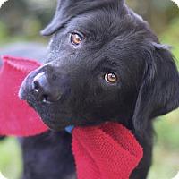 Adopt A Pet :: Ry - Denver, CO