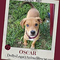 Adopt A Pet :: OSCAR - Lincoln, NE