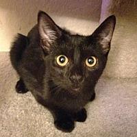 Adopt A Pet :: Zoey - Orange, CA