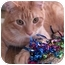 Photo 1 - Domestic Shorthair Cat for adoption in Jenkintown, Pennsylvania - Sparky