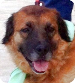 Spaniel (Unknown Type)/Border Collie Mix Dog for adoption in Olive Branch, Mississippi - China-Springs into Fun!