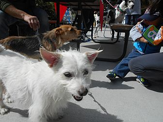 Terrier (Unknown Type, Small) Mix Dog for adoption in Palmyra, Nebraska - George