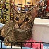 Adopt A Pet :: Cabo - San Antonio, TX