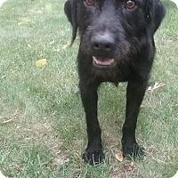 Adopt A Pet :: Axel - Shelter Island, NY