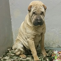 Adopt A Pet :: Stephanie - London, KY