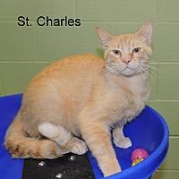 Adopt A Pet :: St. Charles - Slidell, LA