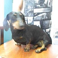 Adopt A Pet :: Samantha - Santa Barbara, CA