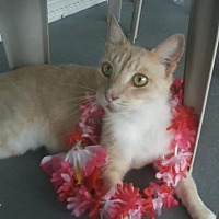 Adopt A Pet :: Nemo - Orange City, FL