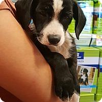 Adopt A Pet :: Bubba - Alhambra, CA