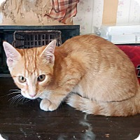 Adopt A Pet :: Shayna - Mississauga, Ontario, ON