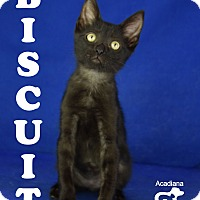 Adopt A Pet :: Biscuit - Carencro, LA