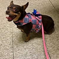 Adopt A Pet :: Kitty - Encino, CA