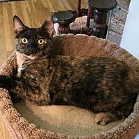 Adopt A Pet :: Orphan Annie - Palo Alto, CA