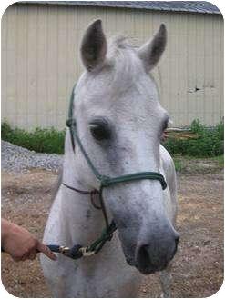 Other/Unknown for adoption in Dewey, Illinois - Hafeeda