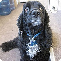 Adopt A Pet :: MAX - Toluca Lake, CA