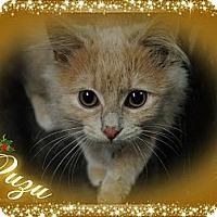 Adopt A Pet :: Zuzu - Washington, DC
