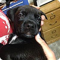 Adopt A Pet :: Lupin - Norman, OK